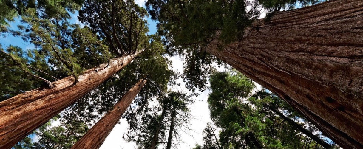 The-Mariposa-Grove-of-Giant-Sequoias2 (1)